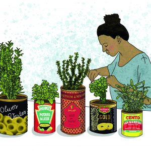 Growing herbs digital illustration by Claire Huntley